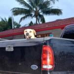 秋の行楽シーズンは犬と車で一緒にお出かけ。と考え中の方は必見ですよ。