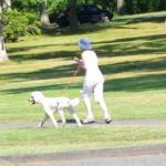 老犬の散歩で注意したい3つのポイント