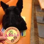 神戸市西区で犬と一緒に行けるドッグカフェ「cafe&Dining Akala」さんが最高に素敵だった件!