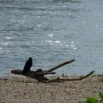 会話する九官鳥のあべちゃんの動画がおもしろい!ご存知でしたか?最近九官鳥を見かけなくなった訳。