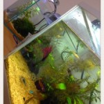 いつか家カフェを熱帯魚水槽のあるカフェに。魚たちに癒される空間でまったりと。