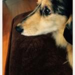 愛犬のかわいい表情が簡単にスマホで撮れる方法。~犬が振り向くカメラアプリを試してみては。