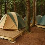 満員御礼♪フクロモモンガのテント中はいつも定員オーバー~神戸のペットシッターワンコノもあやかりたいかも?