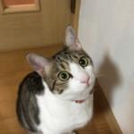 ニャンとも個性豊かな神戸市西区の3匹の猫さんたちは、今日も元気です~神戸のペットシッターワンコノの猫友さん、いらっしゃ~い。
