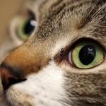 2月22日は猫の日~カルディの「ネコの日バッグ」の内容が可愛すぎる