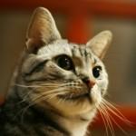 おからの猫砂?進化し続ける猫砂、おすすめはこちら~神戸市西区ペットシッターワンコノのペット便利グッズ、教えちゃいます