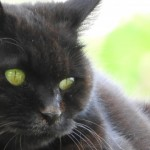 ヤマト運輸に東京ゲゲゲイ、最近何かと縁のある黒猫さん~神戸市西区のキャットシッターワンコノのニャンコなブログ