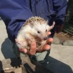 ウサギ、フェレット、モルモット、ハムスターなど小動物ペットシッター、爬虫類もご相談ください!~神戸市西区のペットシッターワンコノのお世話メニュー