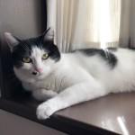 オンオフの切り替えが上手な猫さん〜神戸市西区キャットシッターワンコノの猫友さんいらっしゃ〜い