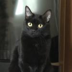 ハロウィンのグッズやコスプレになぜ黒猫さんが多いのか~神戸市西区ペットシッターワンコノの雑学コーナー