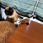 楽しくてコスパ最高、ホームセンターカインズの猫じゃらしをご紹介〜神戸市西区ペットシッターワンコノのオススメ猫グッズ