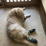 ずっと自分で歩きたい、お散歩したい!をお手伝い。〜神戸のペットシッターワンコノは、いつでも飼い主さんと犬さんの気持ちに寄り添います。