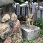 明石の神社で出逢ったお狐さんならぬお猫さん〜神戸市西区ペットシッターワンコノの猫友さんいらっしゃ〜い