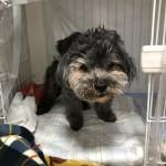 飼い主さんの気持ちに寄り添い高齢犬、高齢猫、ペットの介護をサポート〜神戸市西区ペットシッターワンコノがお手伝いします。