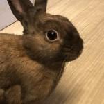 ハムスター、ウサギ、フェレットなど小動物のお世話もお任せください〜神戸市西区ペットシッターワンコノはカブトムシから大型犬までサポートします!