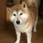 入院や介護など緊急事態でも、ペットたちには普段通りの生活を。〜神戸市西区のペットシッターが出来る飼い主さんのお手伝い。
